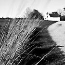 NH Landscape Grass Stalks by Edward Myers