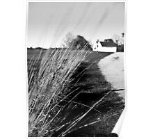 NH Landscape Grass Stalks Poster