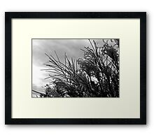 Stalks in BW Framed Print