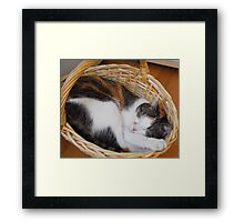 Guess who is sleeping - Nellie II Framed Print