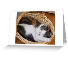 Guess who is sleeping - Nellie II Greeting Card