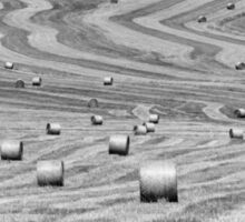 hay cutting patterns, Monticchiello, Tuscany, Italy Sticker