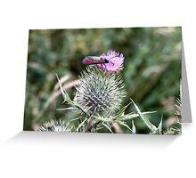 Six Spot Burnet Moth Greeting Card