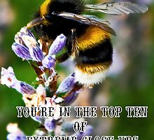 Bee on Lavender Banner by Catherine Hamilton-Veal  ©