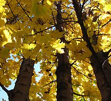 Looking Up Autumn by Linda Miller Gesualdo
