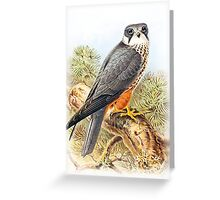 Falcon Image Vintage Greeting Card