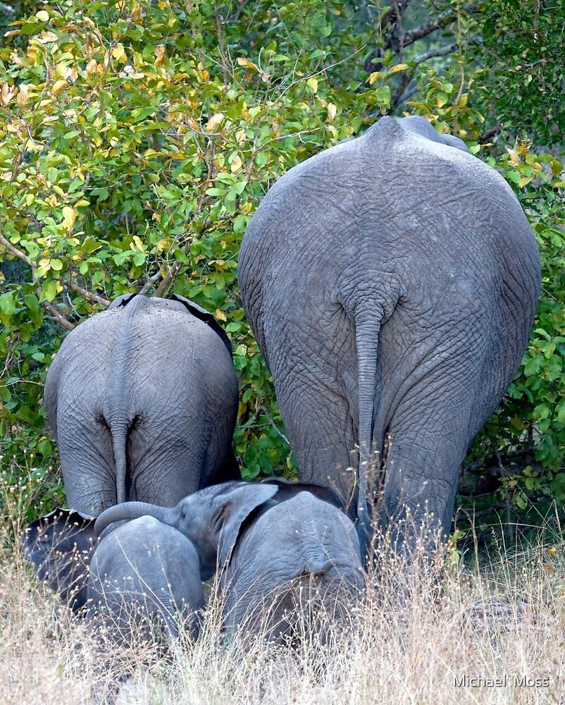 Elephant Roadblock by Michael  Moss