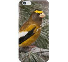 Evening Grosbeak On Pine 2 iPhone Case/Skin