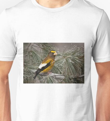 Evening Grosbeak On Pine 2 T-Shirt