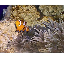 """Nemo"" Photographic Print"