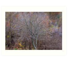 A Tree in Late Autumn Art Print