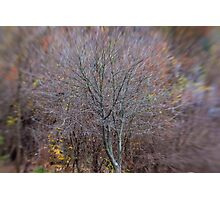 A Tree in Late Autumn Photographic Print