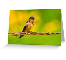Barn Swallow On Barbwire Greeting Card