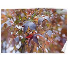 Leaves of Many Colors Poster