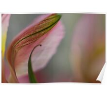 Curly Leaf and Petal Poster