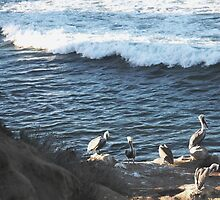 Pelicans & the Pacific by Heather Friedman