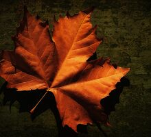 Fallen Leaf by Stephen Morris