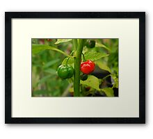 Hot, Hot, Hot! Framed Print