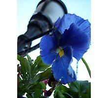 Look up! Photographic Print