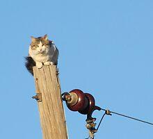 pole cat by gabbielizzie