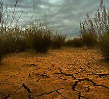 Desert Cracks by Matt Harvey