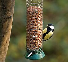 Great Tit by Phil-Edwards
