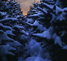 Christmas Tree Farm by Doug Gruber