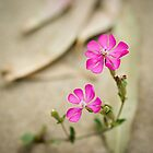 Wild beyond spring by George Parapadakis (monocotylidono)