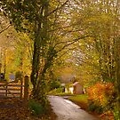 All Roads Lead To Somewhere, Orchard Hill. by Mike  Waldron