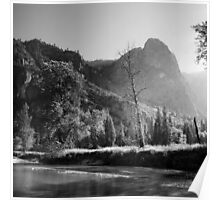 dead tree yosemite banks Poster