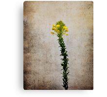 Vintage Wildflower Canvas Print