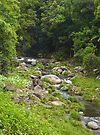 Cedar Creek, near Murwillumbah by Odille Esmonde-Morgan