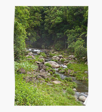 Cedar Creek, near Murwillumbah Poster