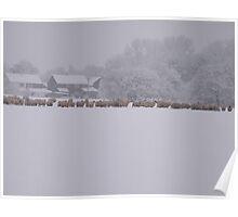 snowy flock Poster