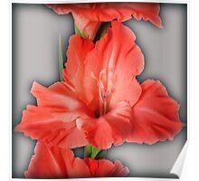 gladiola in pastel tones Poster