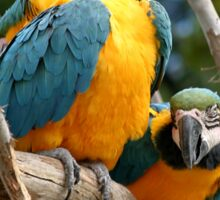 Blue And Gold Macaws Sticker