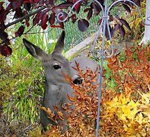 Autumn Deer by Al Bourassa