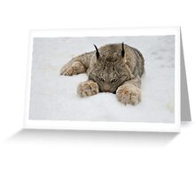 Lynx in Snow Greeting Card