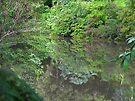 Reflections on Byrrill Creek by Odille Esmonde-Morgan
