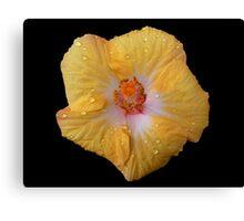 Hibiscus Flower - Up Close Canvas Print