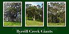 Byrrill Creek GIants by Odille Esmonde-Morgan