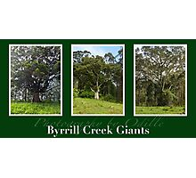 Byrrill Creek GIants Photographic Print