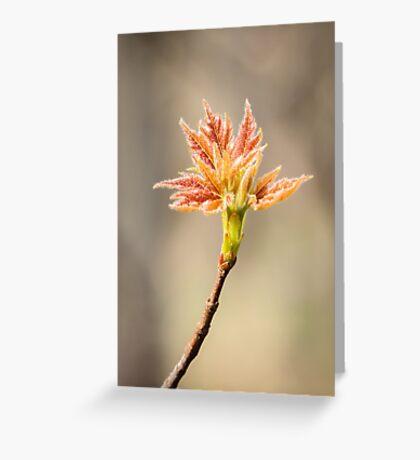 Budding Maple Leaf in Southwestern Michigan Greeting Card