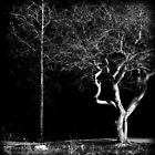 Two Trees by Theodore Black