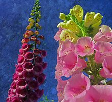 Two Foxglove flowers with textured background by Robert Gipson
