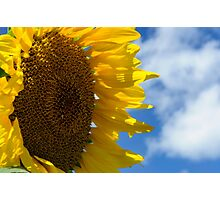 Sunny Faces and Blue Skies Photographic Print
