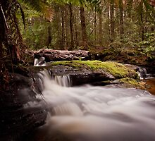 Relapse Creek Cascades by Kylie  Sheahen