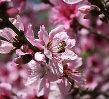Peaches and Bees by ChristinaMWA