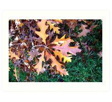 colors of Autumn  no.10 Art Print