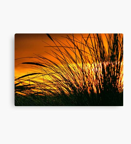 Grass in the Sunset Canvas Print